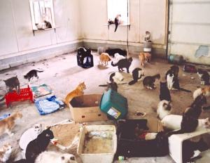 hoarding_animals